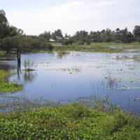 Pond, Cambodia, 2012
