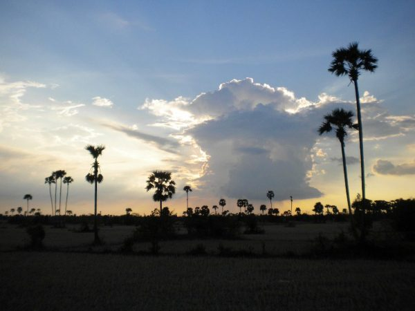Palms, Cambodia, 2012