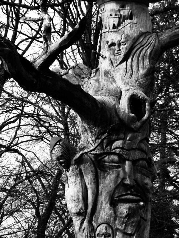 Tree in Staufen (Germany), 2011